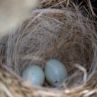 Science Observation: Bird's Nest