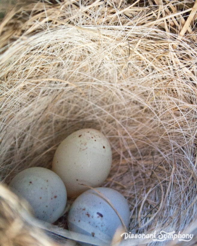 Nest Day 10