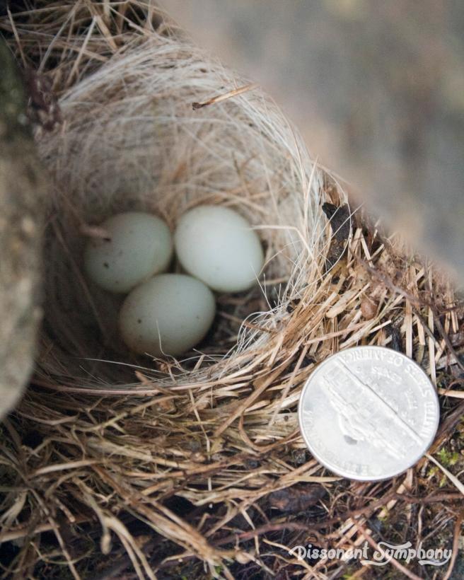 Nest Day 4