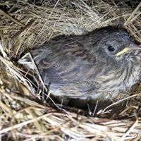 Science Observation: Bird's Nest Day 27