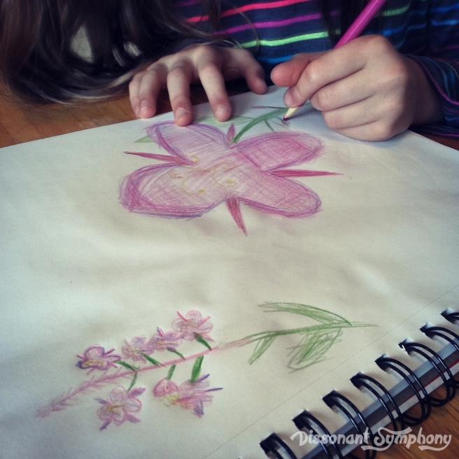 Fireweed Drawing