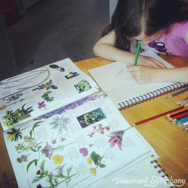 Nature Sketching3