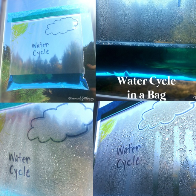 Water Cycle in a Bag -- Dissonant Symphony